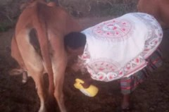 Dairy farming is helping women increase family incomes in low income areas of rural Kenya