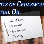 Benefits Of Cedarwood Essential Oil Uses For Cedarwood Oil Fox Creek Cedar Oil