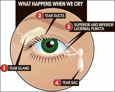 Tips For Dry Eyes From Contacts | Spectacle Shoppe Canada