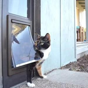 dog doors pet doors cat doors all