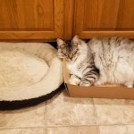 How To Get Your Cat To Actually Use Their Cat Bed Meowingtons