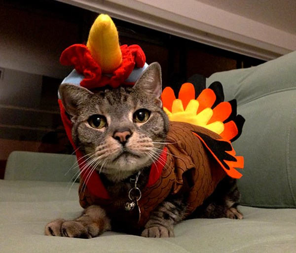 10 Reasons To Be Thankful For Your Cat This Thanksgiving