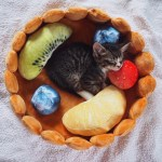 Cutest Cat Bed Ever The Fruit Tart Cat Bed Meowingtons