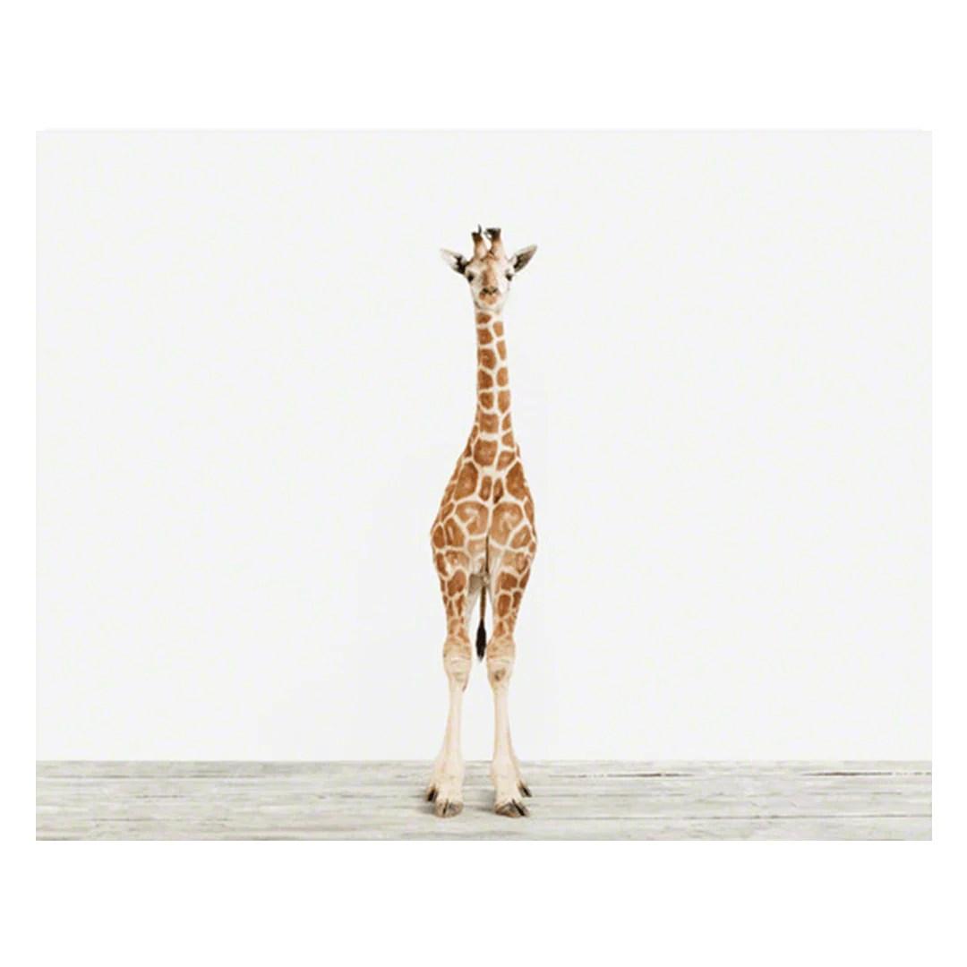 Baby Giraffe Print Project Nursery