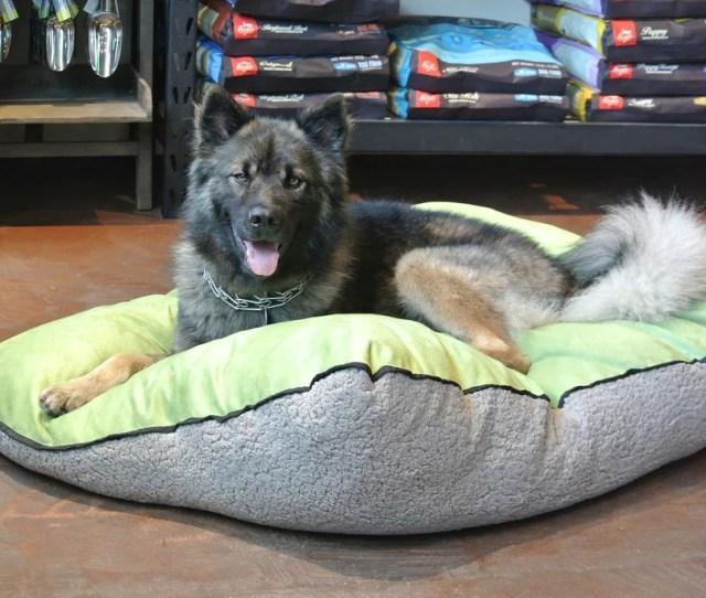 The Perfect Pet Bed No Longer Just A Dream