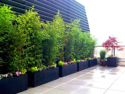 bamboo privacy screen in containers