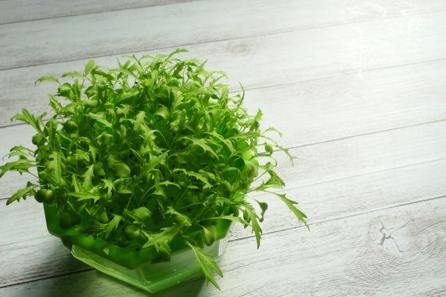 水耕栽培キットは植え替えなどの手間がなく、コスパが優れていることがメリットです。