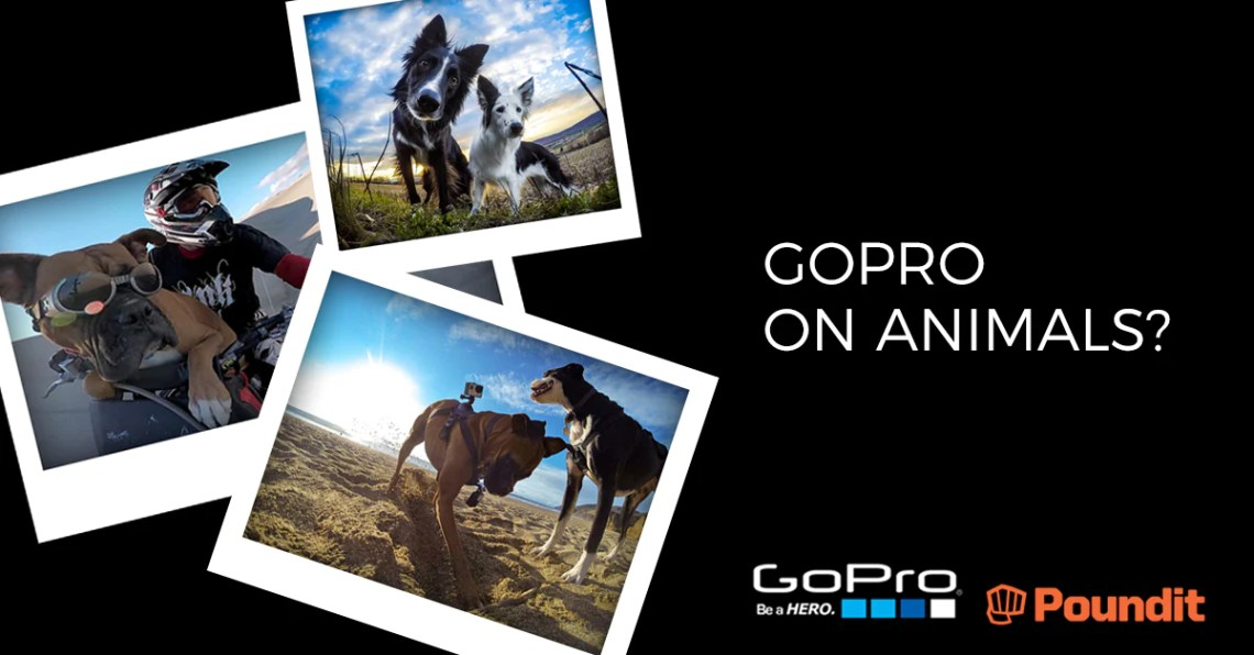 What Happens When You Put a GoPro on Animals?