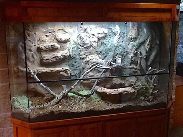 Exhibit Rattle Snake Terrarium