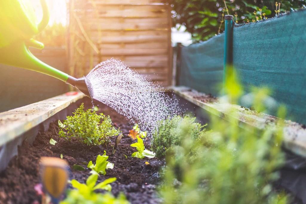 Feed Your Plants Vanderwees Garden Gallery