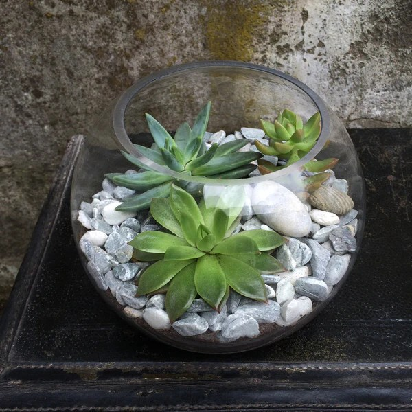 terrarium with succulents