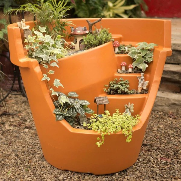 Unique Succulents Sale