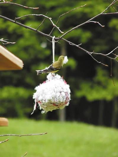 Cotton Nesting Ball The Birdhouse Chick