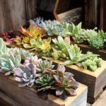 Succulent Centerpieces For Baby Shower Online
