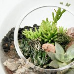 Terrarium Care How To Care For Terrariums With Succulents Cacti Tropicals Pistils Nursery