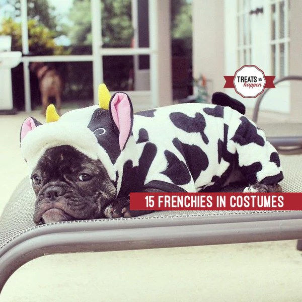 15 Frenchies Who Are Winning At Halloween Treats Happen