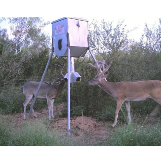 dove hunts truck feeders deer texas south whitetail news feeder turkey auger filling quail