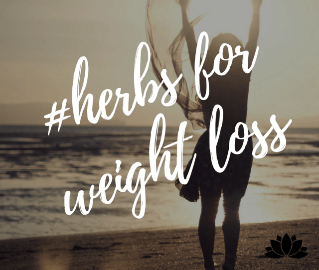 Top  Chinese Herbs For Weight Loss Support
