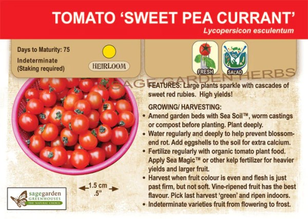 sweet pea currant # 22