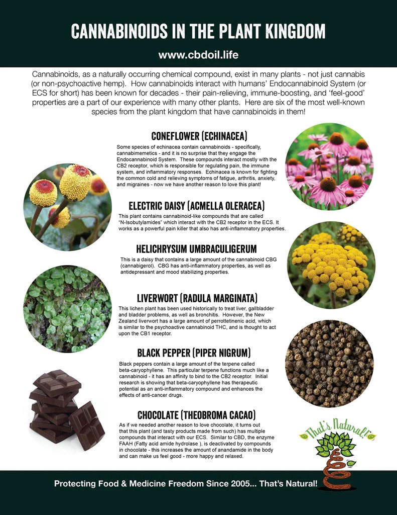 Cannabinoids in other plants besides cannabis - phytocannabinoids from That's Natural at cbdoil.life