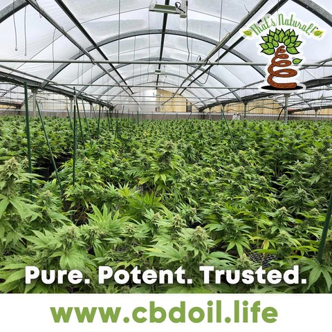 hemp-derived CBD, legal hemp CBD, The That's Natural cannabinoids include: CBD (Cannabidiol), CBDa (Cannabidiolic Acid), CBC (Cannabichromene), CBG (Cannabigerol), and CBN (Cannabinol) - Entourage Effect - see more from Thats Natural at www.cbdoil.life, cbdoil.life, and www.thatsnatural.info  see more from Thats Natural at www.cbdoil.life and find us an our Life Force Market outside of Basalt, Colorado in the Aspen Valley next to the Willits Gas Station #ThatsNatural #lifeforce #cod #cbdoil