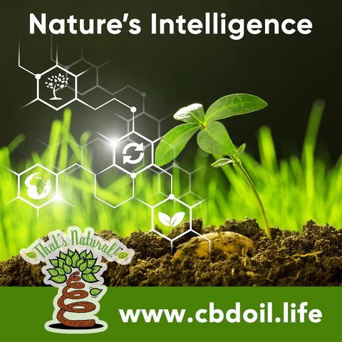 family-owned CBD company, legal hemp CBD, hemp legal in all 50 States, hemp-derived CBD, Thats Natural topical CBD products, CBDA, CBDA Oil, Life Force with biodynamic Colorado hemp - That's Natural CBD Oil from hemp - whole plant full spectrum cannabinoids and terpenes legal in all 50 States - www.cbdoil.life, cbdoil.life, www.thatsnatural.info, thatsnatural.info, CBD oil testimonials, hear from customers of CBD oil products, CBD for coronavirus, CBD for COVID-19
