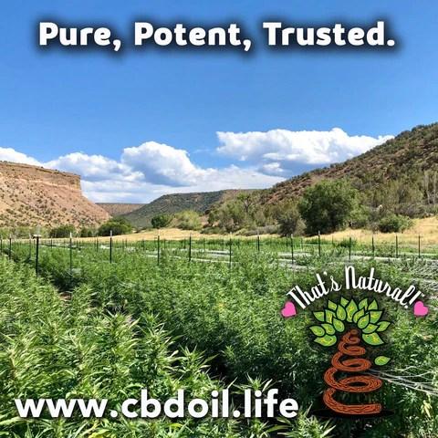most trusted CBD, best-rated CBD, best CBD brand - Entourage Effect - That's Natural full spectrum CBD oil products with cannabinoids and terpenes - experience the entourage effect with Thats Natural CBD Oil, legal hemp CBD, hemp legal in all 50 States, CBD, CBDA, CBC, CBG, CBN, Cannabidiol, Cannabidiolic Acid, Cannabichromene, Cannabigerol, Cannabinol; beta-myrcene, linalool, d-limonene, alpha-pinene, humulene, beta-caryophyllene - find at cbdoil.life and www.cbdoil.life