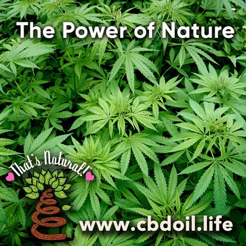 family-owned CBD company, legal hemp CBD, hemp legal in all 50 States, hemp-derived CBD, Thats Natural topical CBD products, CBDA, CBDA Oil, Life Force with biodynamic Colorado hemp - That's Natural CBD Oil from hemp - whole plant full spectrum cannabinoids and terpenes legal in all 50 States - www.cbdoil.life, cbdoil.life, www.thatsnatural.info, thatsnatural.info, CBD oil testimonials, hear from customers of CBD oil products