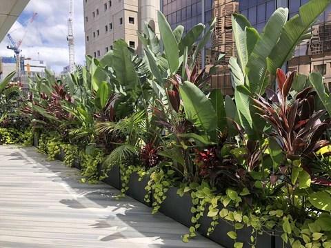 Tropical Garden Design Eastern Suburb Sydney Terrace Outdoor Living