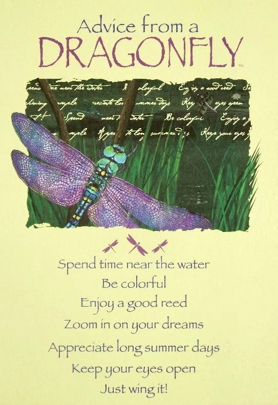 Advice From A Dragonfly Greeting Card Birthday Your True Nature Inc