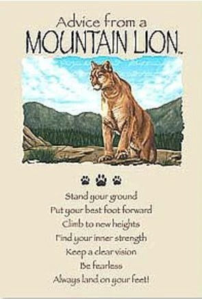 Advice From A Mountain Lion Greeting Card Birthday Your True Nature Inc