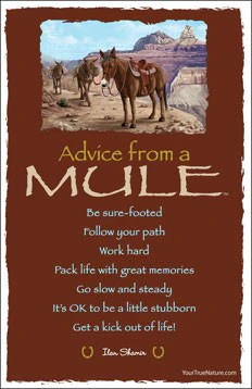 Advice From A Mule Grand Canyon National Park