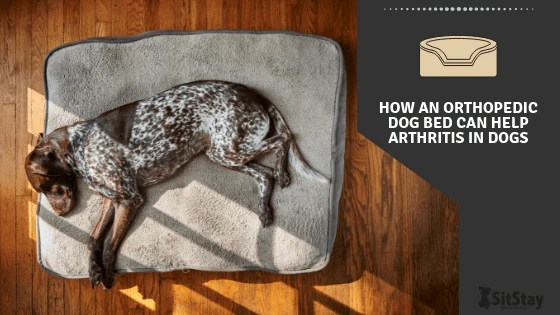 how an orthopedic dog bed can help
