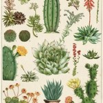 Cacti Succulents Art Paper Lark A Modern Marketplace