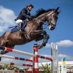 Do Horses Enjoy Showjumping