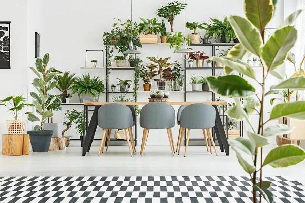3 Big Indoor Trees That Bring Jungle Vibes Orchid Republic Orchid Republic