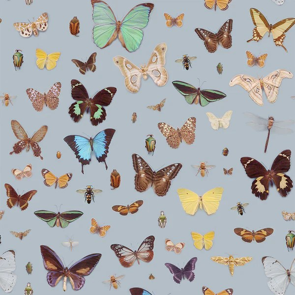 Bugs and Butterflies wallpaper     Ella Doran