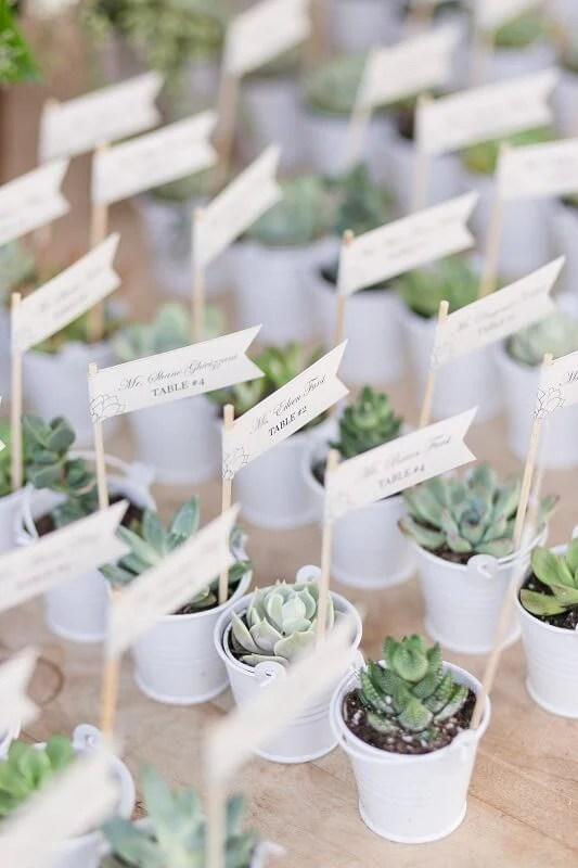 Baby Cactus Sale
