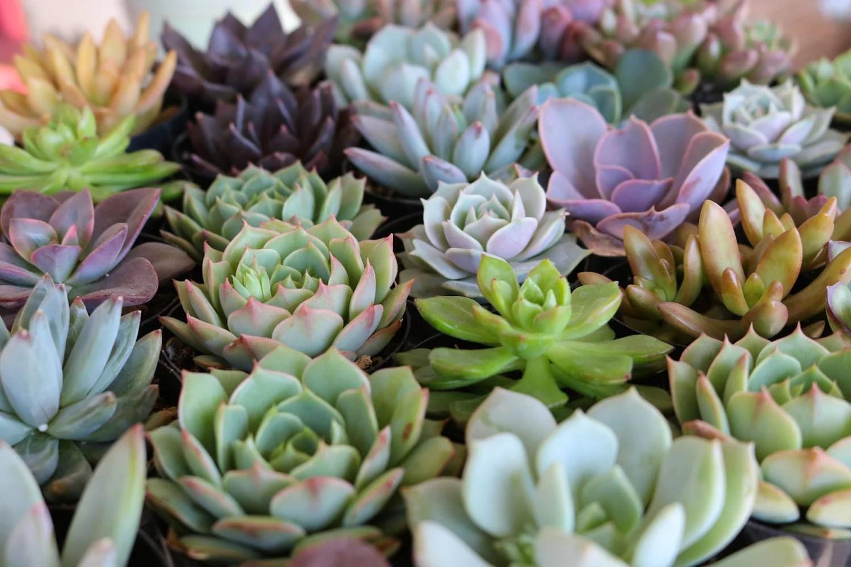 Sale Garden Decor