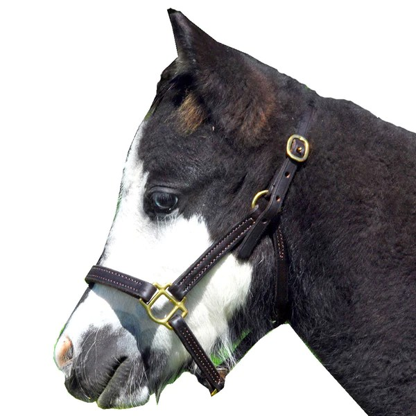 Wire Grazing Muzzle