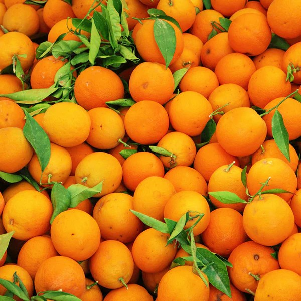 Image result for clementine tree
