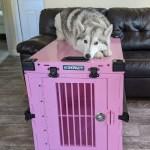 Custom Color Ideas Impact Dog Crates
