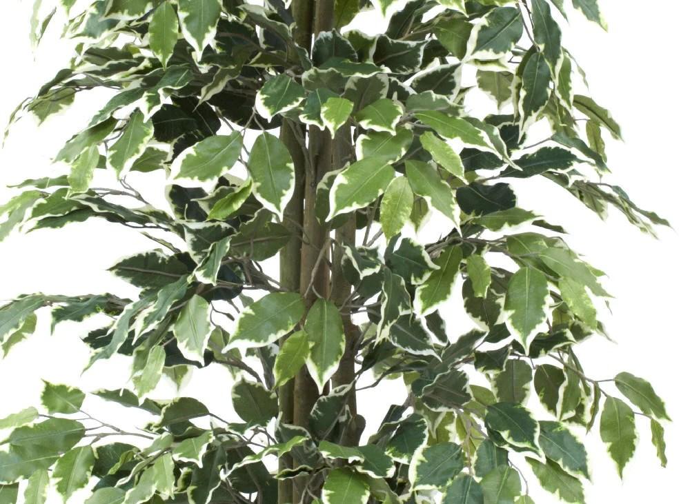 Ficus Nitida Tree Artificial Green