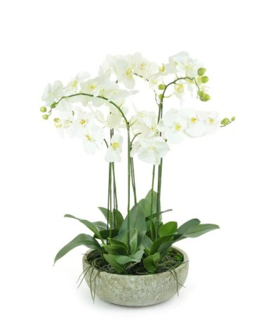 Luxury Large Artificial Orchid Arrangement In Pot White