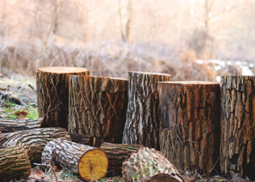 cut trees natural resources