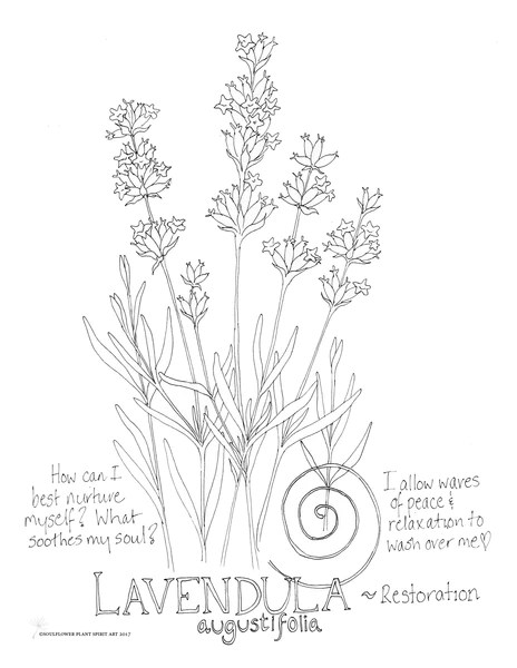 Lavender Restoration Coloring Page My Soulflower