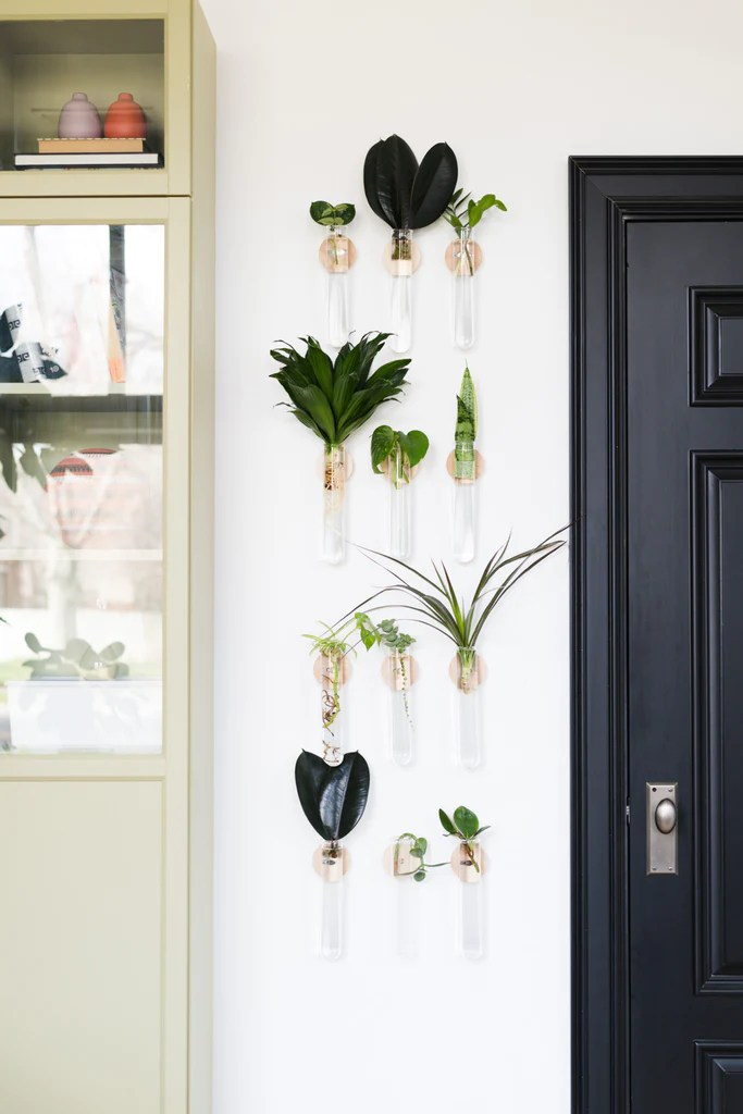 Modern Propagation Planter - Top 5 houseplants that are impossible to kill.