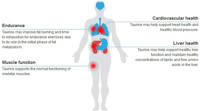 LTaurine | Health Benefits and Uses of LTaurine