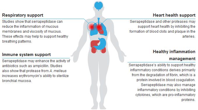 Serrapeptidase | Health Benefits and Uses of Serrapeptidase