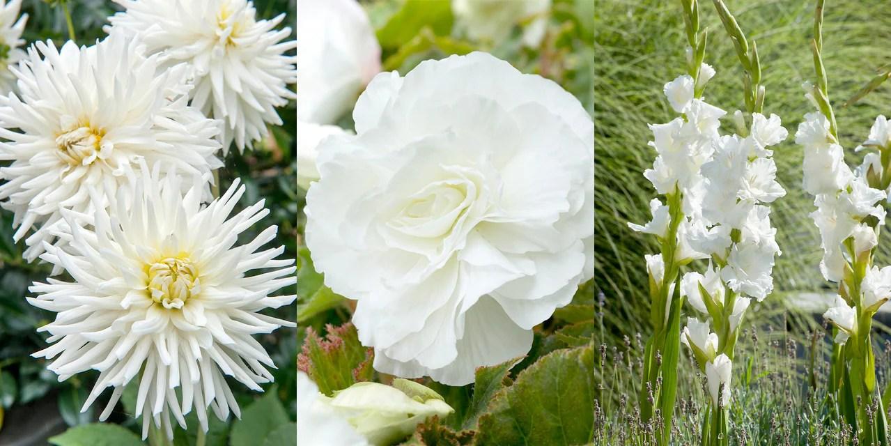 10 Great Plants For A White Summer Garden Farmer Gracy S Blog